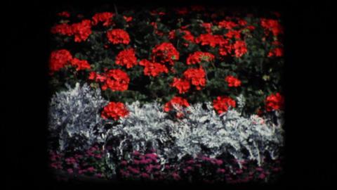 Vintage 8mm. Public flower garden Stock Video Footage