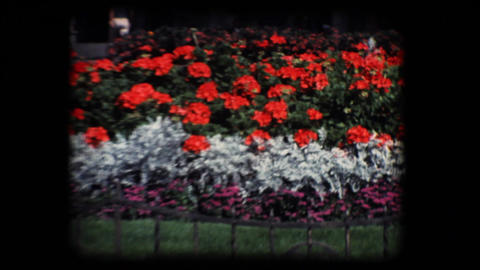 Vintage 8mm. Public flower garden Stock Video Footage