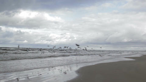 Gulls fly above a sea coast Stock Video Footage