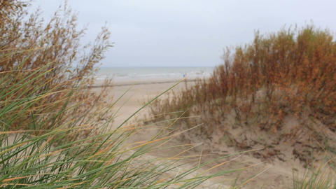 Grass on the Baltic sea coast. Windy weather. Medium shot Footage