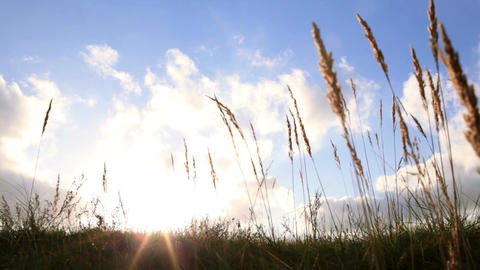 Grass ears and sky with clouds at sunset Stock Video Footage