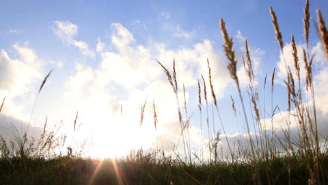 Grass ears and sky with clouds at sunset Footage