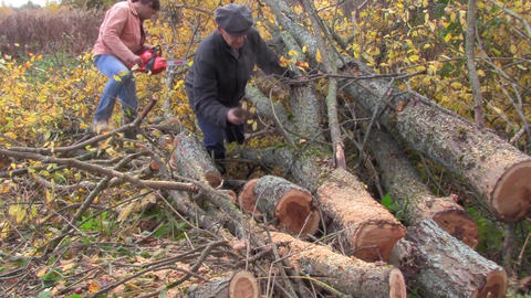sawing tree Stock Video Footage