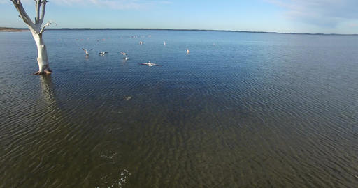 Camera slides fast to a flock of flamingos flying over a lake at epecuen near th Footage