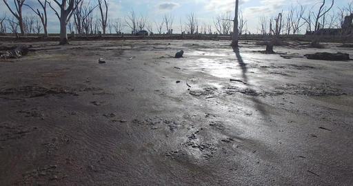 Camera slides fast near the sand floor on a beach with dead trees. Wet dark sand Footage