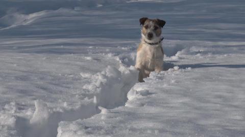 Dog in Deep Snow Footage