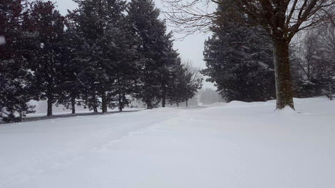 Snow Storm Blizzard With Evergreen Trees. Snowing Nature Scene With Tree Area Live Action