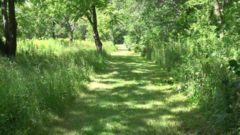 Walk along hiking path on sunny summer day Footage