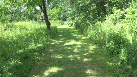 Walk along hiking path on sunny summer day Footage