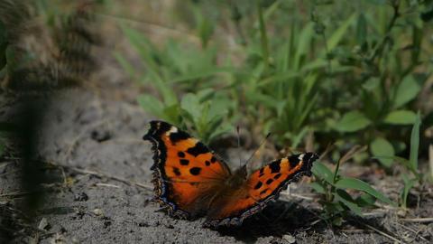 Beautiful butterfly open her winds in slow motion GIF