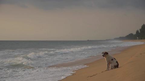 Stray dog 2 Footage