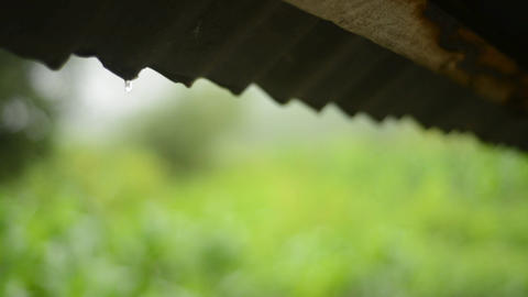 Close up rain drop from roof in the farm with green background Footage