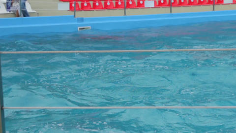 Dolphins Emerge From The Pool Footage