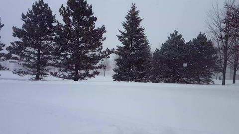 Blizzard Nature Landscape 0