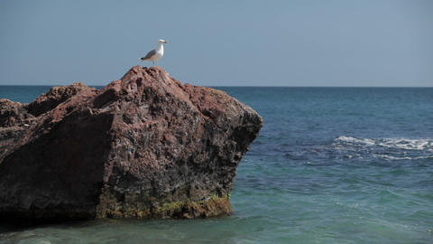Bird a seagull sits on a stone by the sea Stock Video Footage