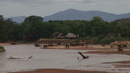 Elephants in a river next to a wildlife lodge Footage