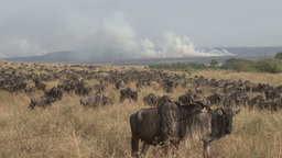 Burning grass in the wildebeests migration route Footage