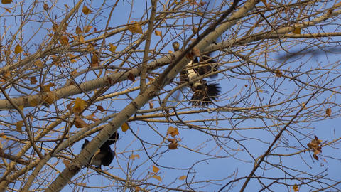 Cormorant flies and sits on tree Live Action