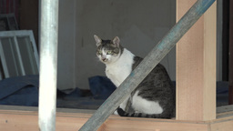 A CAT IN CONSTRUCTION SITE Footage