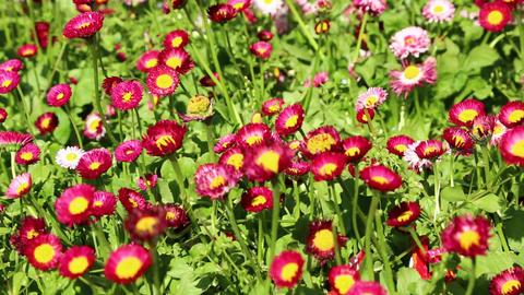 In iran antique garden 017 Footage