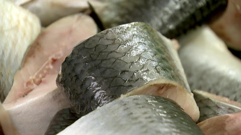 Sea herring fillet lies in plastic containers Live Action