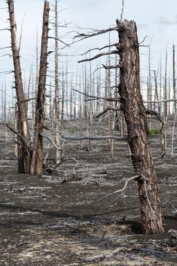 Lifeless desert landscape of Kamchatka: Dead wood Fotografía
