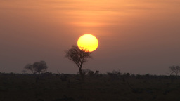 Timelapse of a sunrise behind acacia tree Footage