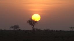 Timelapse of a sunrise behind acacia tree Footage