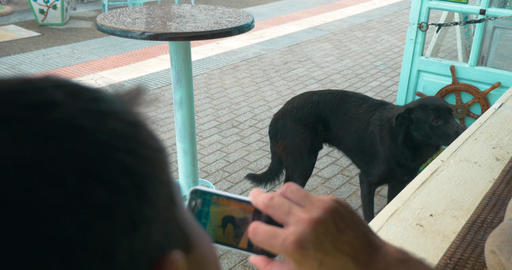 Man with cell phone taking picture of stray dog Footage