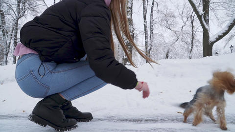 Woman tries to pet yorkshire terrier with snow on fur. Dog shakes off the snow Footage