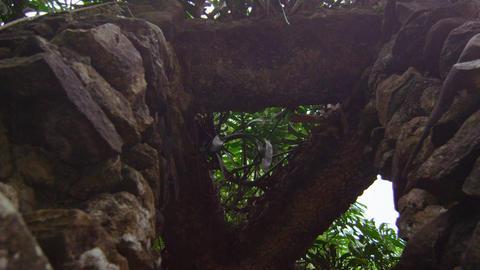 Mossy Rock Structure in Jardim Botanico, Rio Footage