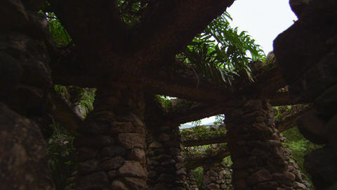 Breeze blows plants that surround the rock structure in Jardim Botanico, Rio Footage