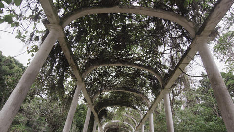 Tracking Shot along the center of the walkway beneath Jardim Botanico arches in  Footage