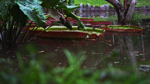 Panning shot of water and greenery in Botanical gardens Live Action