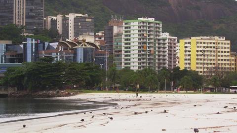 Static shot of pigeons along the beach in Rio de Janeiro, Brazil Footage