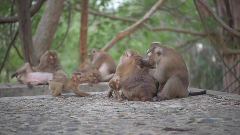 Monkey Family Life stock footage