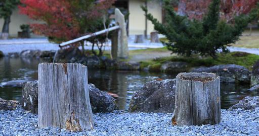 Japanese traditional garden at the park in autumn in Shizuoka Japan ビデオ