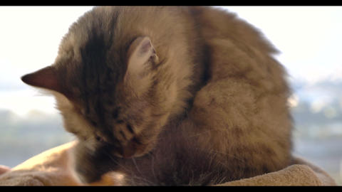 closeup cat licking and slow motion Stock Video Footage