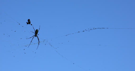Black spider in the blue sky Footage