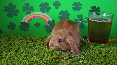 St patrick clover background with lucky bunny Saint Patricks day green concept Footage
