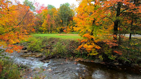 Pan Across Stream Burbling Through Vibrant Trees During Fall Colors in Vermont ビデオ