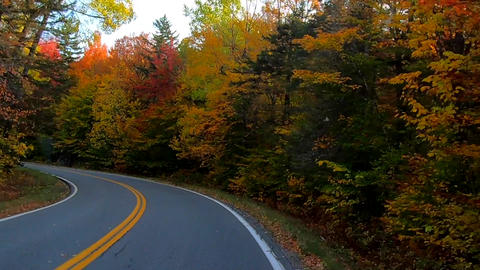 TimeLapse - Driving Under Trees as Trees Change Colors During Fall in Vermont Footage