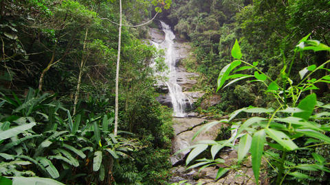 Tracking shot of jungle tree, waterfall Footage