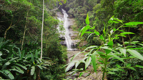 Tracking shot of a small tree and waterfall in a jungle Footage