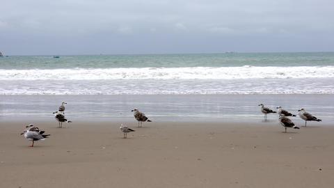 San Pedro, Ecuador - September 15, 2018 - Seagulls on Beach Footage