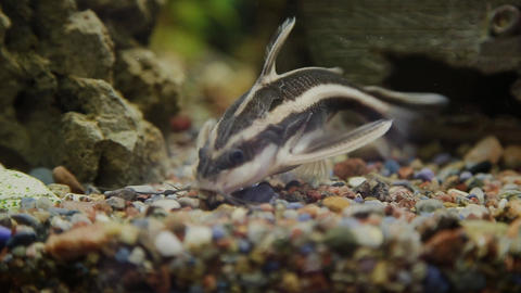 Aquarium with fish and green grass GIF