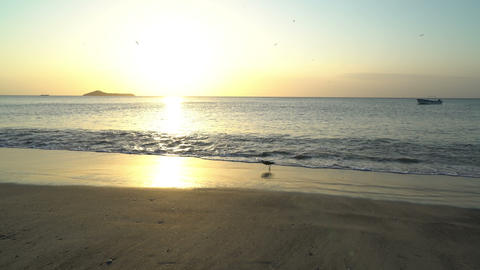 funny small gray heron running at the beach on sunset,... Stock Video Footage