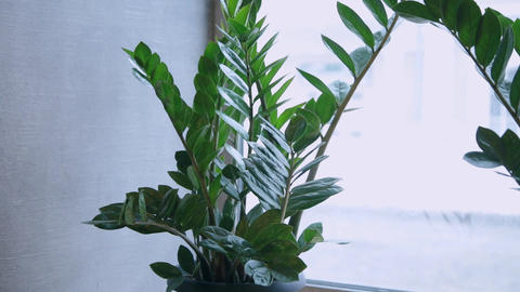 green plants on the window in the cafe Footage