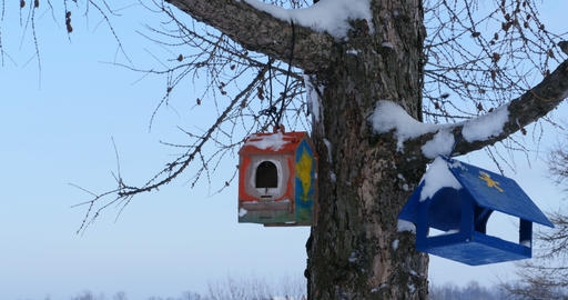 bird feeders on a tree Live Action