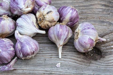Garlic on wooden vintage background. Seedlings for planting garlic フォト